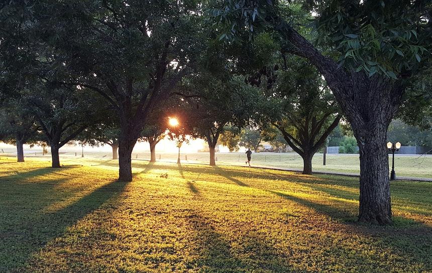 Park at sunrise.