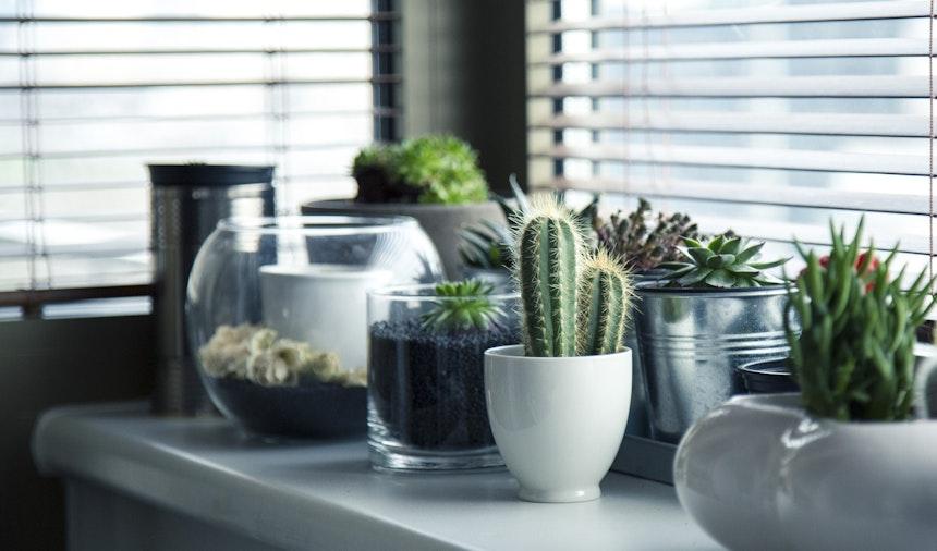 Indoor plans beside a window