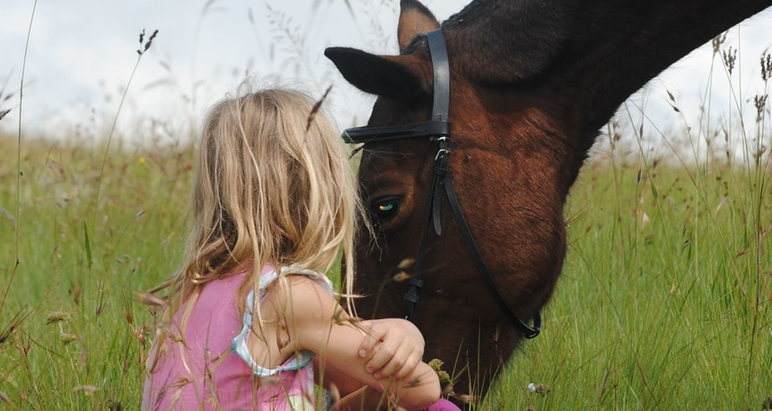 Horse and girl in a field