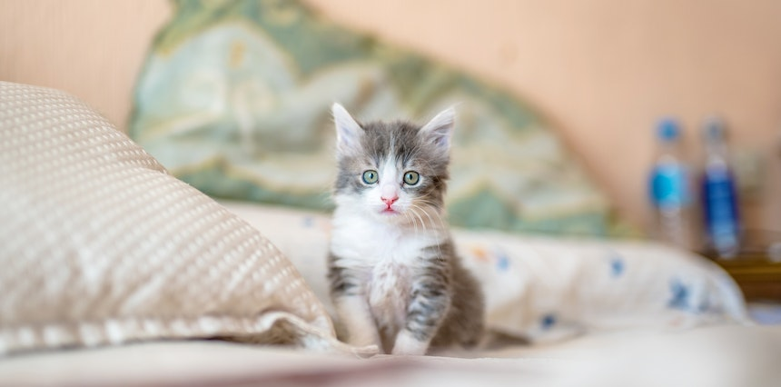 everything you need to know about adopting a kitten
